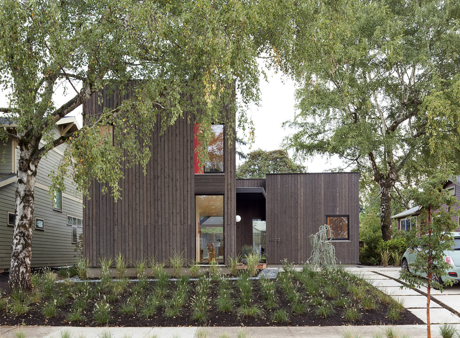Exterior, House Building Type, Flat RoofLine, and Wood Siding Material While the home's simple, boxy forms starkly contrast with surrounding residences, its compact shape and modest scale help it fit into the traditional neighborhood without calling attention to itself. The house was built around a large birch tree, with dwarf fountain grass and porcupine grass planted in front. A weeping blue atlas cedar provides a focal point near the front door.  Super-Insulated Houses That Stand Up to Winter's Chill by Heather Corcoran from A Green Portland Home Built to Passive House Standards