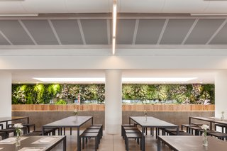 """Inside, a large planting feature designed by Michael Hellgreen of Vertical Garden Design clads the kitchen block. """"The idea behind the vertical garden was to bring a natural element to the space, since the overall look was very minimal,"""" architect Duarte Caldas says."""