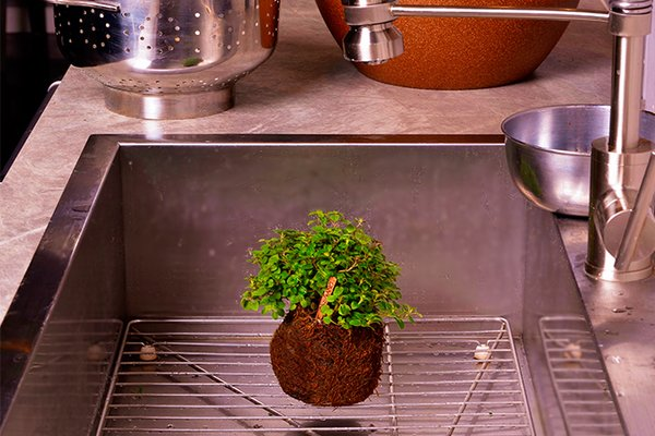This self-contained garden by Global Gardens doesn't require a planter. Just dip the soil ball in water and drain to keep the herbs and succulents growing.