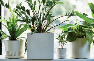 The Store That's Changing How City-Dwellers Buy Plants