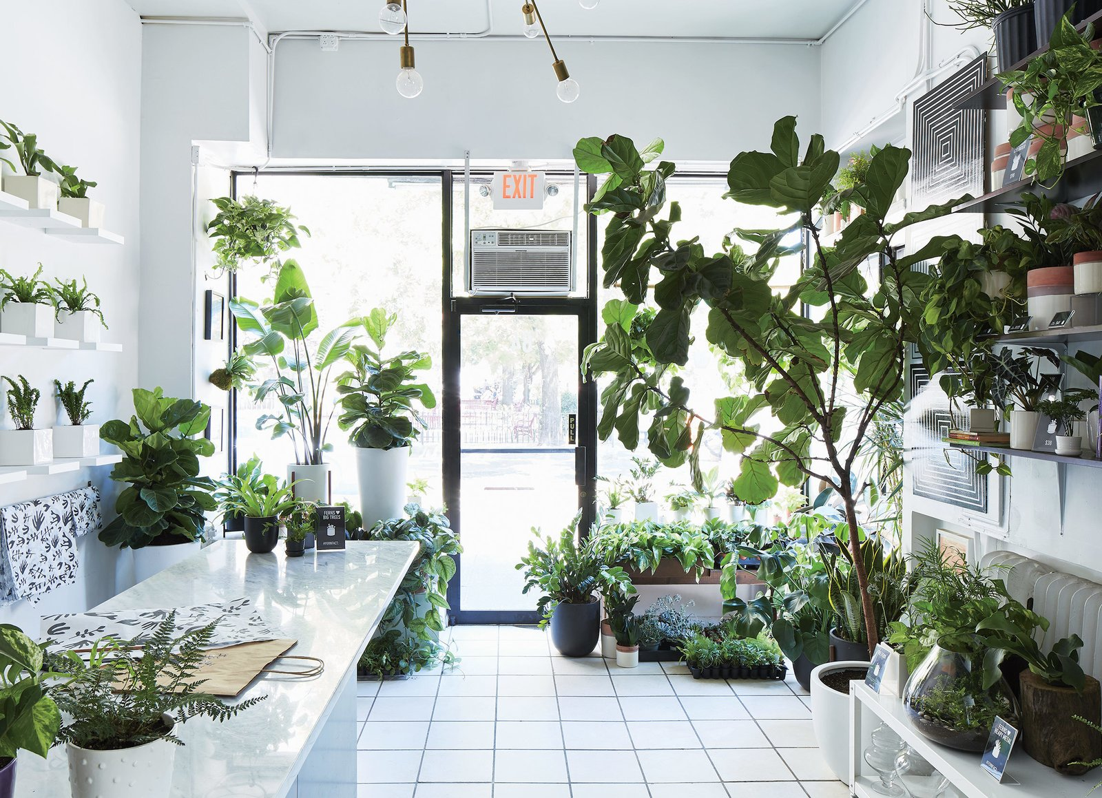 """Our specialty is really big and really small,"" says Eliza Blank, founder of The Sill, where popular offerings range from towering fiddle-leaf fig trees to tiny tabletop succulent sets.  Photo 2 of 6 in The Store That's Changing How City-Dwellers Buy Plants"