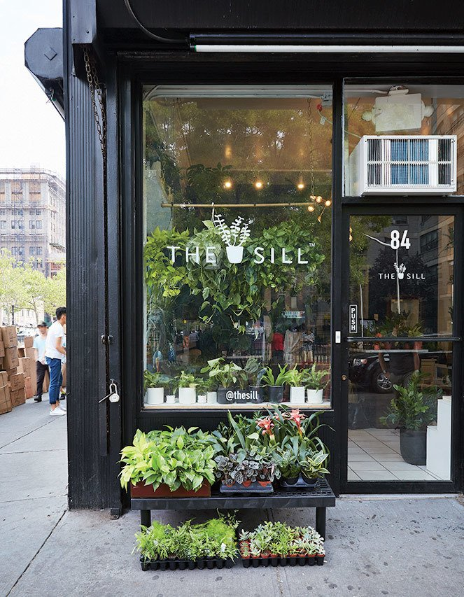 The staff at the 240-square-foot Chinatown shop aim to teach new plant owners everything from proper potting to when to water.  Photo 4 of 6 in The Store That's Changing How City-Dwellers Buy Plants