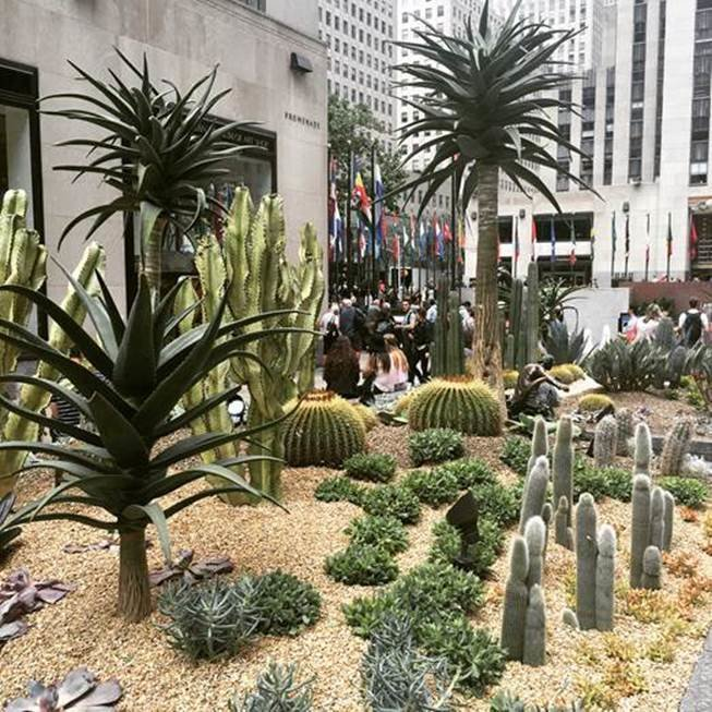Titled Sunscape, the garden features dozens of exotic cacti reaching as high as 16 feet tall as well as a variety of succulents.  Photo 3 of 5 in Just Desert: A Cactus Garden Grows in Midtown Manhattan