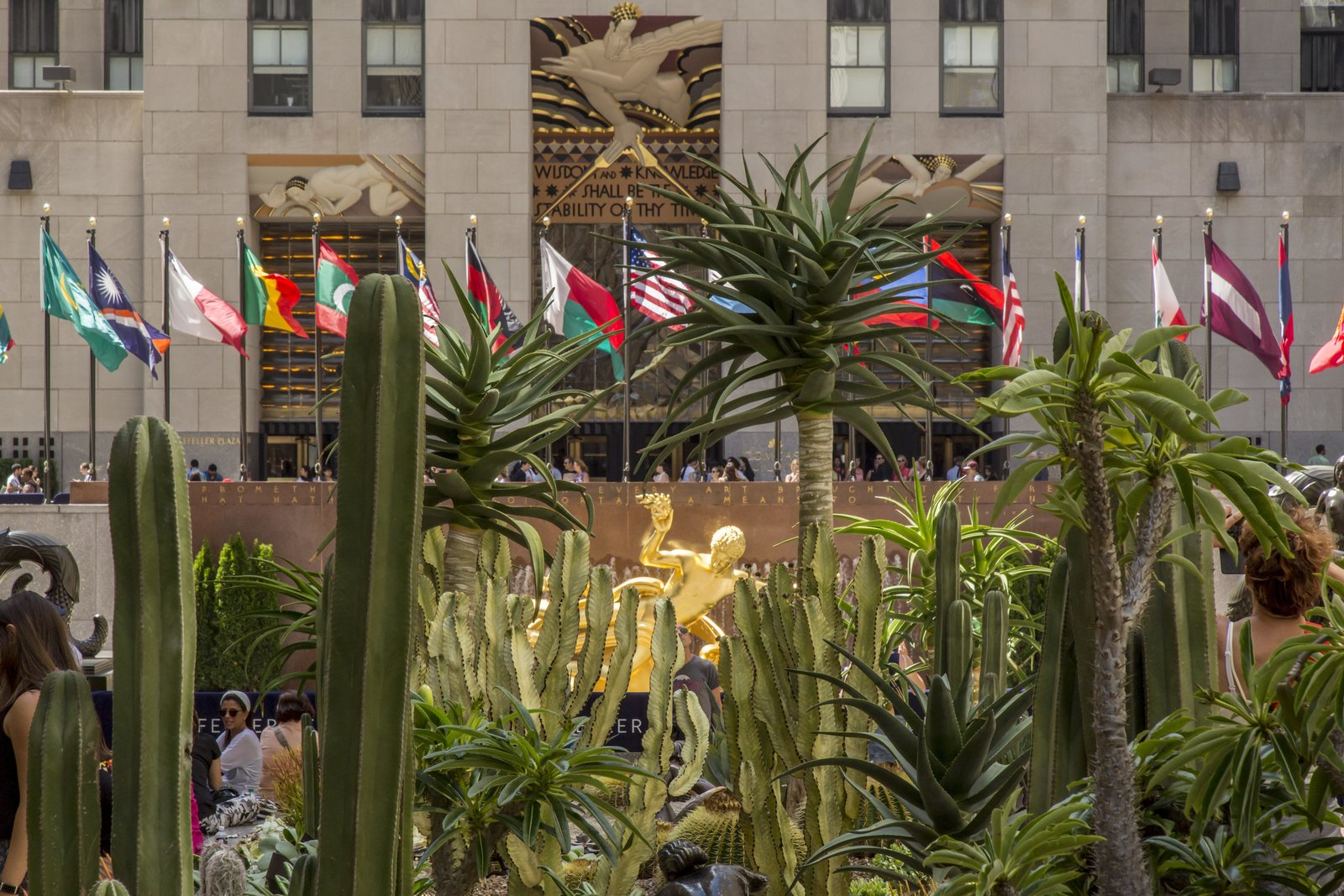 For the month of June 2016, Rockefeller Center's Chanel Gardens will be filled with a cactus garden designed by Lifescapes International.  Photo 2 of 5 in Just Desert: A Cactus Garden Grows in Midtown Manhattan
