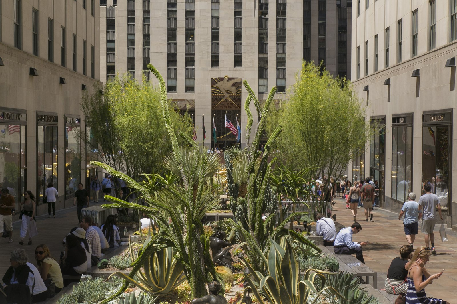 The installation starts at Fifth Avenue and runs toward the ice rink at the base of the iconic Art Deco 30 Rock skyscraper.  Photo 5 of 5 in Just Desert: A Cactus Garden Grows in Midtown Manhattan