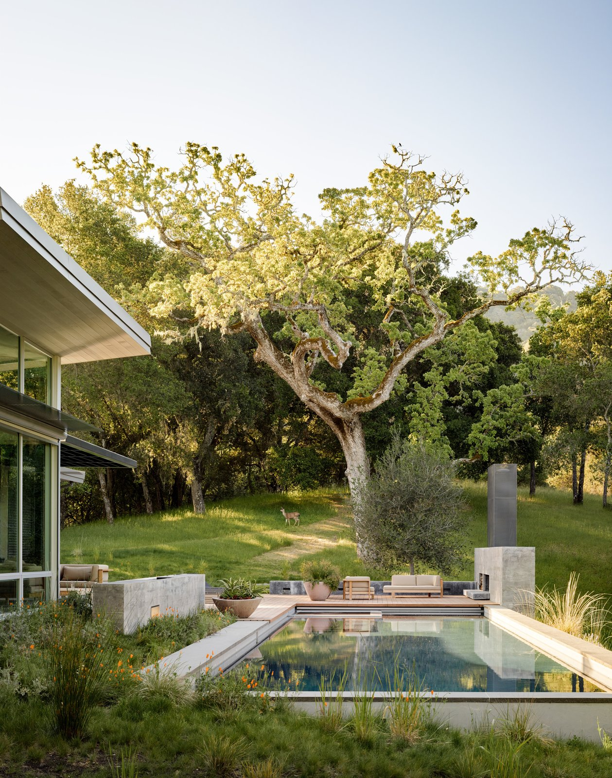 Outdoor, Back Yard, Front Yard, Side Yard, Swimming Pools, Tubs, Shower, Trees, and Grass Wildlife are frequent visitors here, but the area's active woodpeckers aren't very welcome, so the house is clad in corrugated metal siding by Recla Metals.  Modern Pool Design by Dwell from A Meadow With Amenities