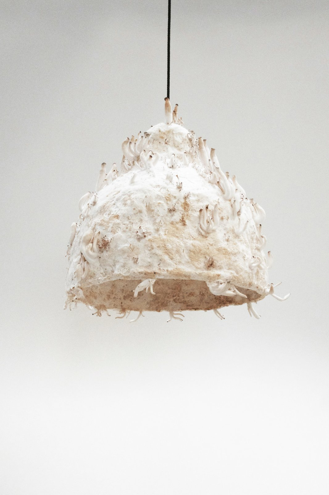 Jonas Edvard's MYX lamp is made from plant fiber and fungus grown over the course of two to three weeks.  Photo 2 of 7 in Grow Your Own Designs Like Jonas Edvard