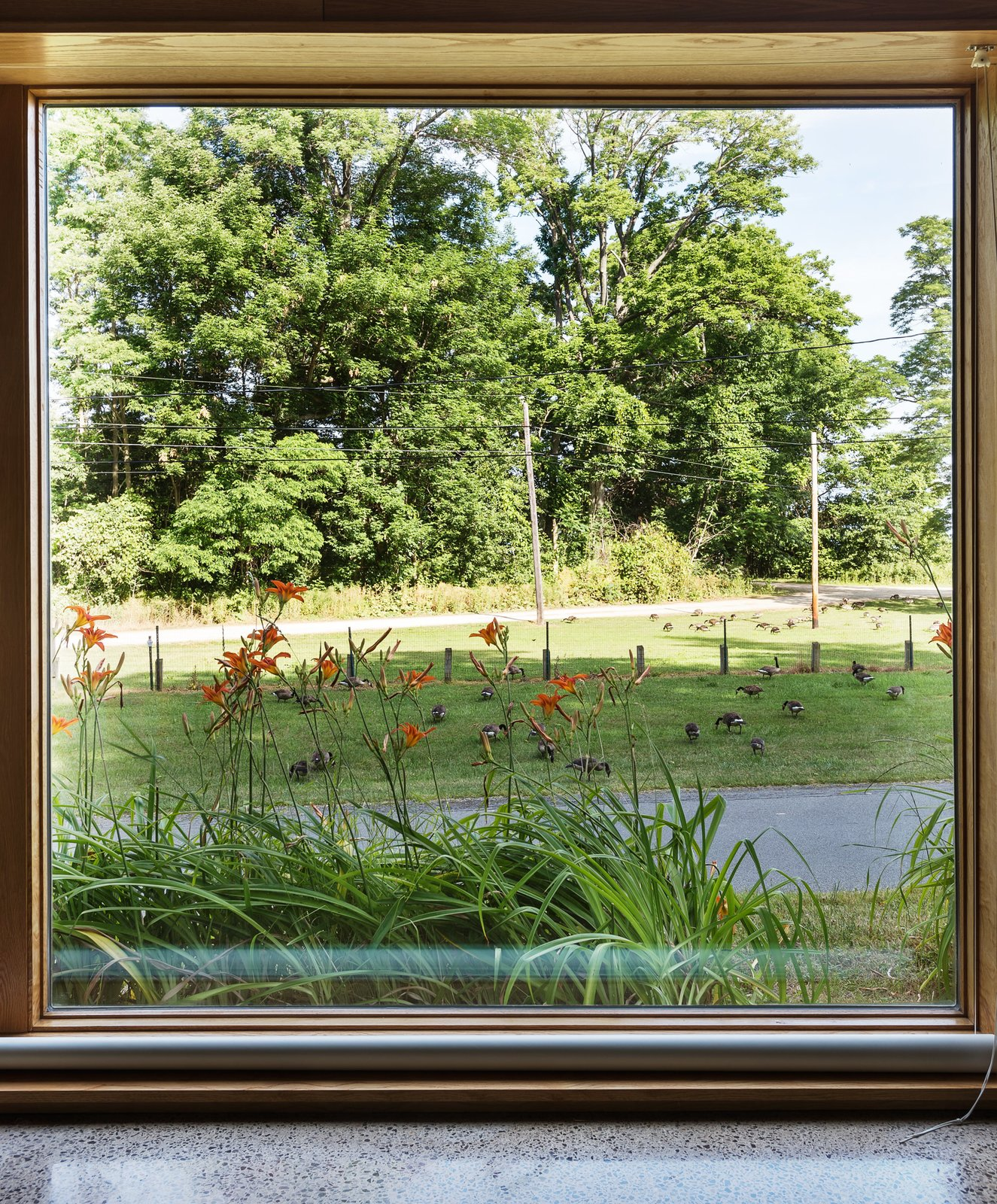 Romanzia rolling blinds extend from the floor to cover the Architectural Collection glazing by Eagle Windows. Tagged: Outdoor, Front Yard, Grass, and Trees.  Photo 5 of 8 in Cottage Industrious
