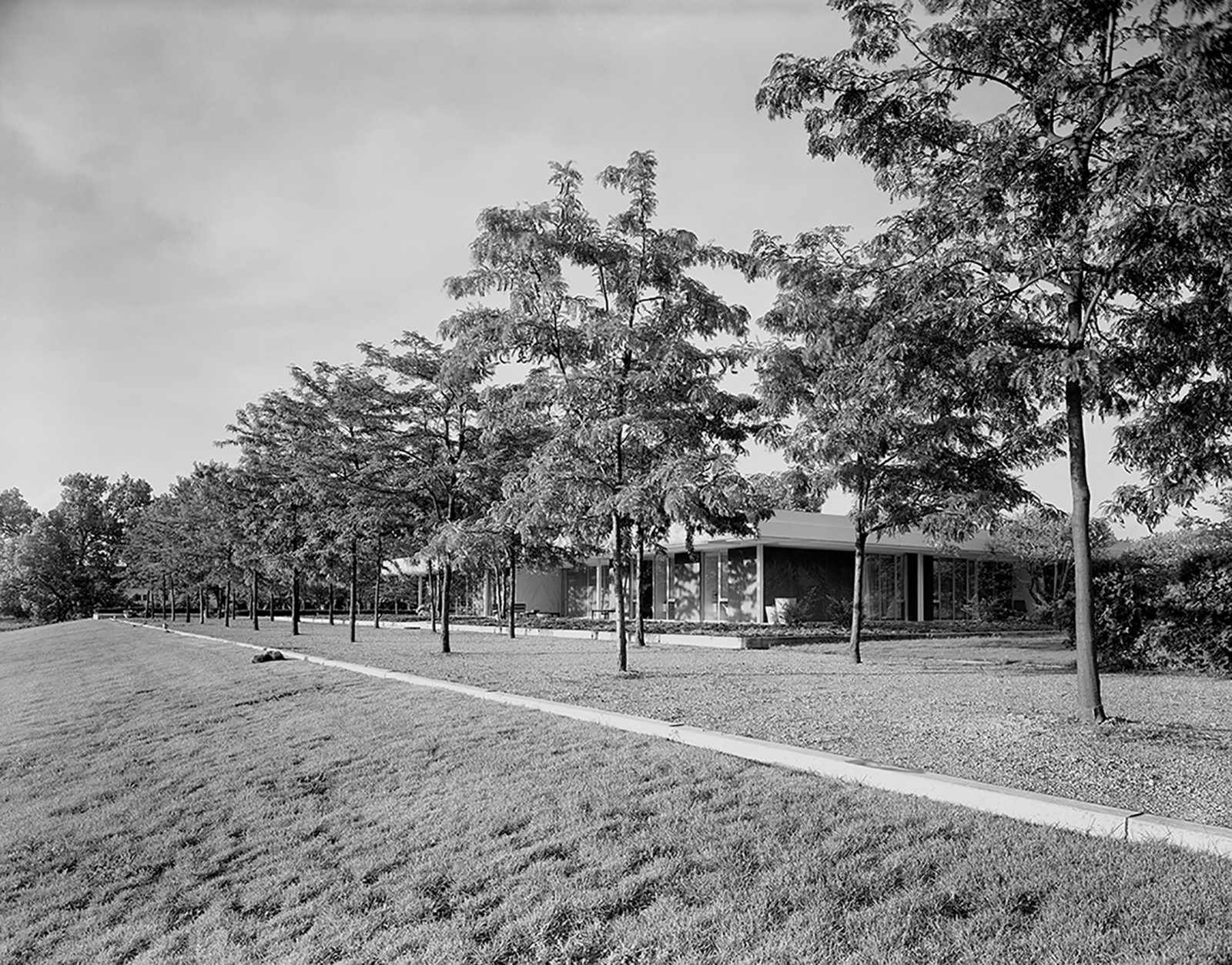 Dan Kiley famously planted two rows of honey locusts at the Miller House in Columbus, Indiana. The arbor flanks the western side of the Eero Saarinen–designed home, echoing  its geometric lines.  Photo 4 of 5 in The Modernist's Tree