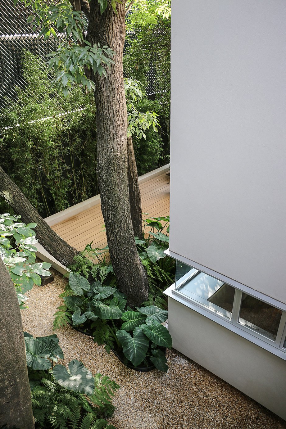 Outdoor, Trees, Small Patio, Porch, Deck, and Wood Patio, Porch, Deck Filters purify rainwater that drains from the roof or through the wood-plastic composite deck.  A cistern collects the water for indoor use.  Photo 3 of 13 in Retired Couple Build Modern in Mexico City