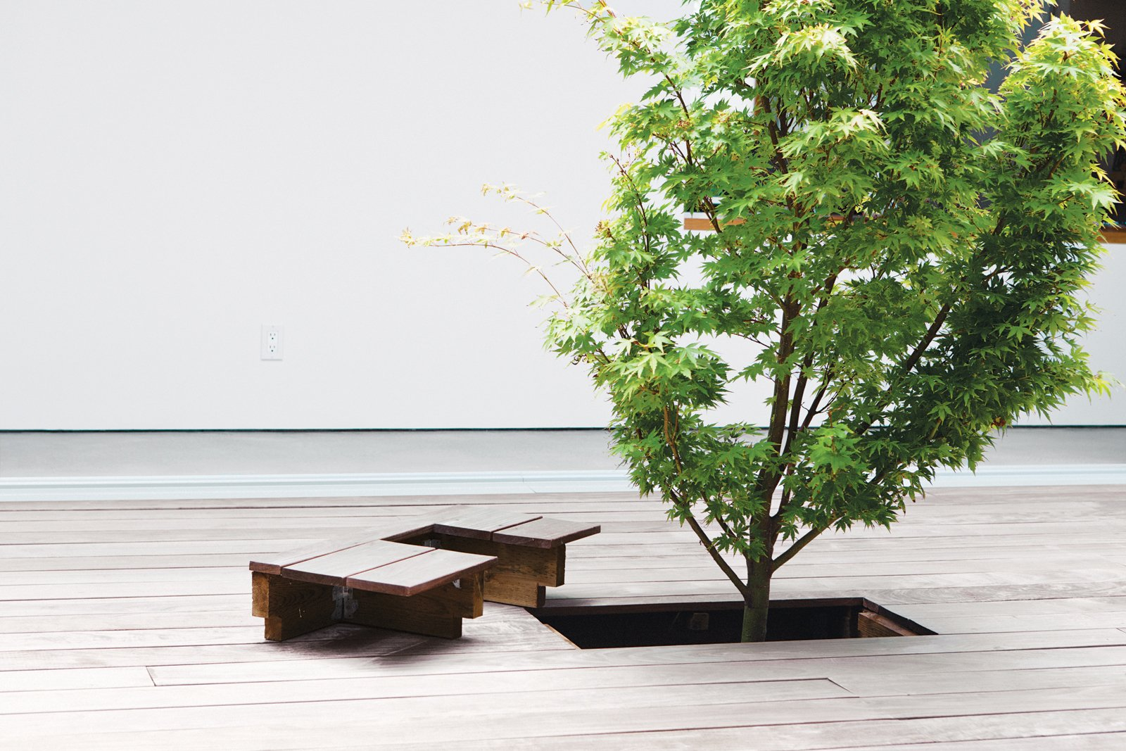 Because the Japanese maple in the courtyard had to be planted before the ipe deck was laid, Kurath designed a small removable panel to allow access to the tree's base. The Shozis can pull up the bit of decking to tend to the tree and replace it when they're through. And because the boards line up perfectly, only the gardener need know it's there.  Photo 8 of 16 in 15 Brilliant Designs That Work Around Nature