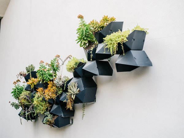 """Succulents spill out of planters from Wayfair on an outer wall. """"The idea was to imitate birds flying up to the sky,"""" Lynn says."""