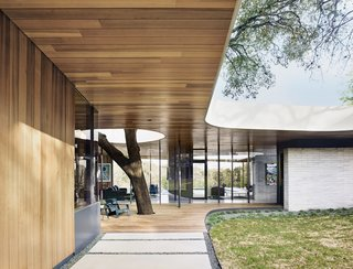 "Julie and Chris Hill's home in Austin is built around a pair of massive oak trees, one of which shoots through an ipe deck, past a Loll deck chair, and into a void in the overhanging roof. ""The hole also allows light to penetrate deeper into the house,"" notes designer Kevin Alter. A limestone brick wall mirrors the curves of the Western red cedar roof, the edges of which are coated in stucco."