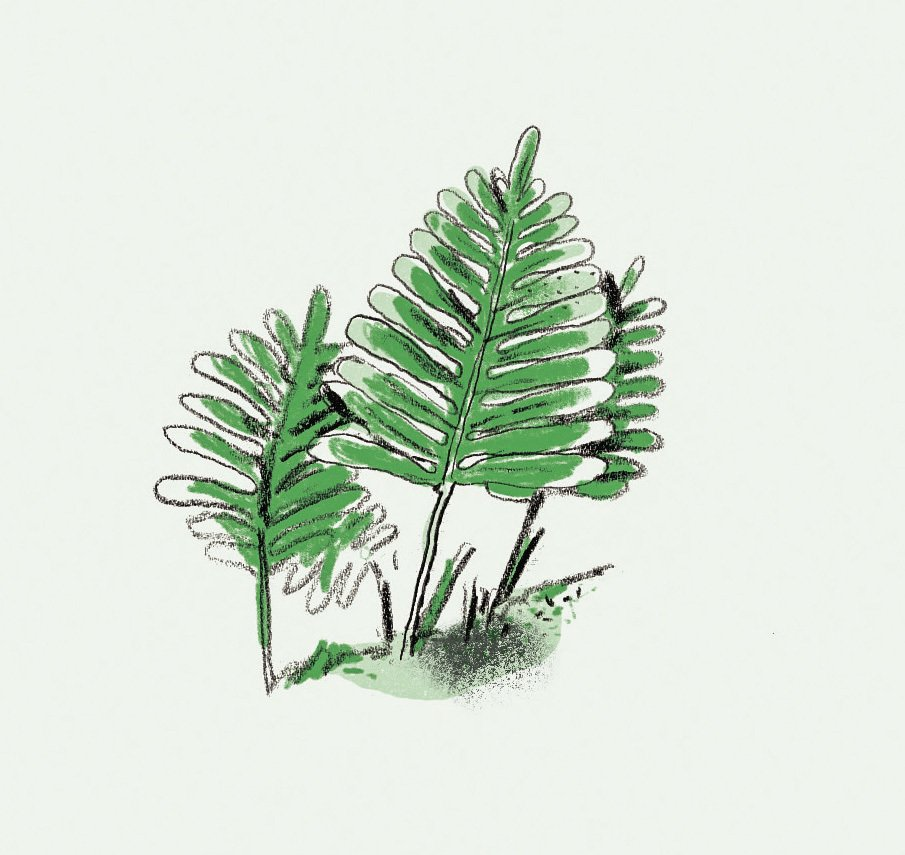 Resurrection Fern  Photo 3 of 7 in 6 Landscape Pros From Across the U.S. Share the Plants They Really Dig