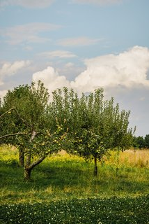The family presses apple trees from the hundred-year-old orchard for cider.
