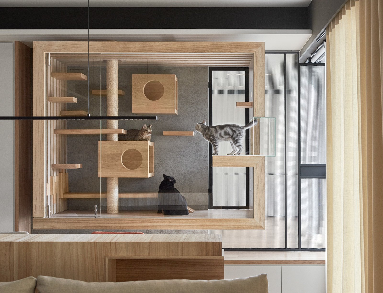 Cat Play Enclosure made of glass and wood