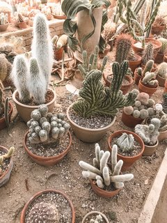 """We are pretty major cactus lovers, and if you feel the same we'd highly suggest a visit to Moorten Botanical Garden. It's """"down the hill"""" from Joshua Tree in Palm Springs, but it's worth the trip."""