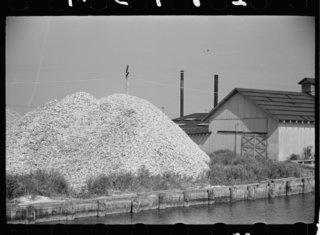 Oyster middens—huge heaps of discarded shells—like this one in New Jersey have been a rich building resource in U.S. history, providing raw material for making mortar.