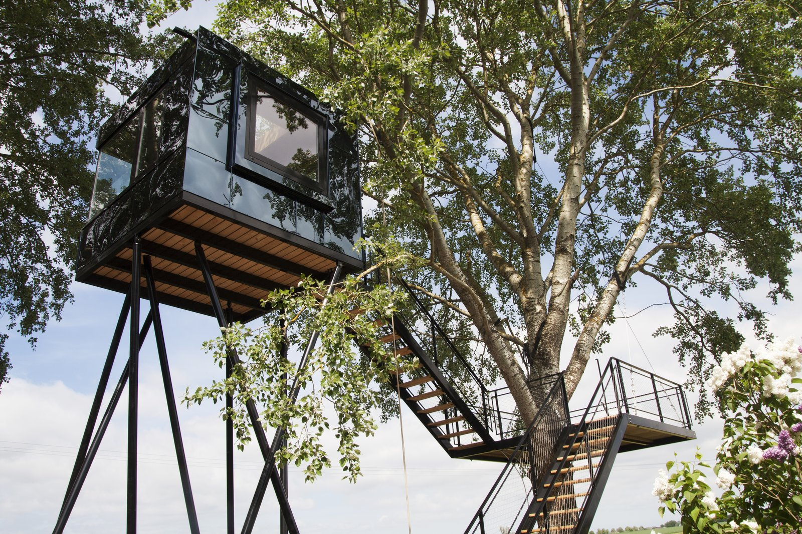 Black Beauty tree house