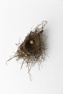 Jeanne Gang Shares Why She Keeps More Than 20 Bird's Nests in Her Office
