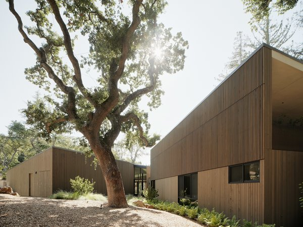 "A centuries-old blue oak stands near the intersection of the two wings of the house, which is clad in Alaskan yellow cedar. ""We decided to split the house into two volumes to let in light and allow us to be more nimble with where we placed the structures."" Jess Field, the architect."