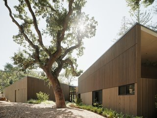 A Silicon Valley Home Splits Around a Magnificent Blue Oak