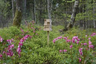 Here's How to Make Your Own Bee Home for World Bee Day