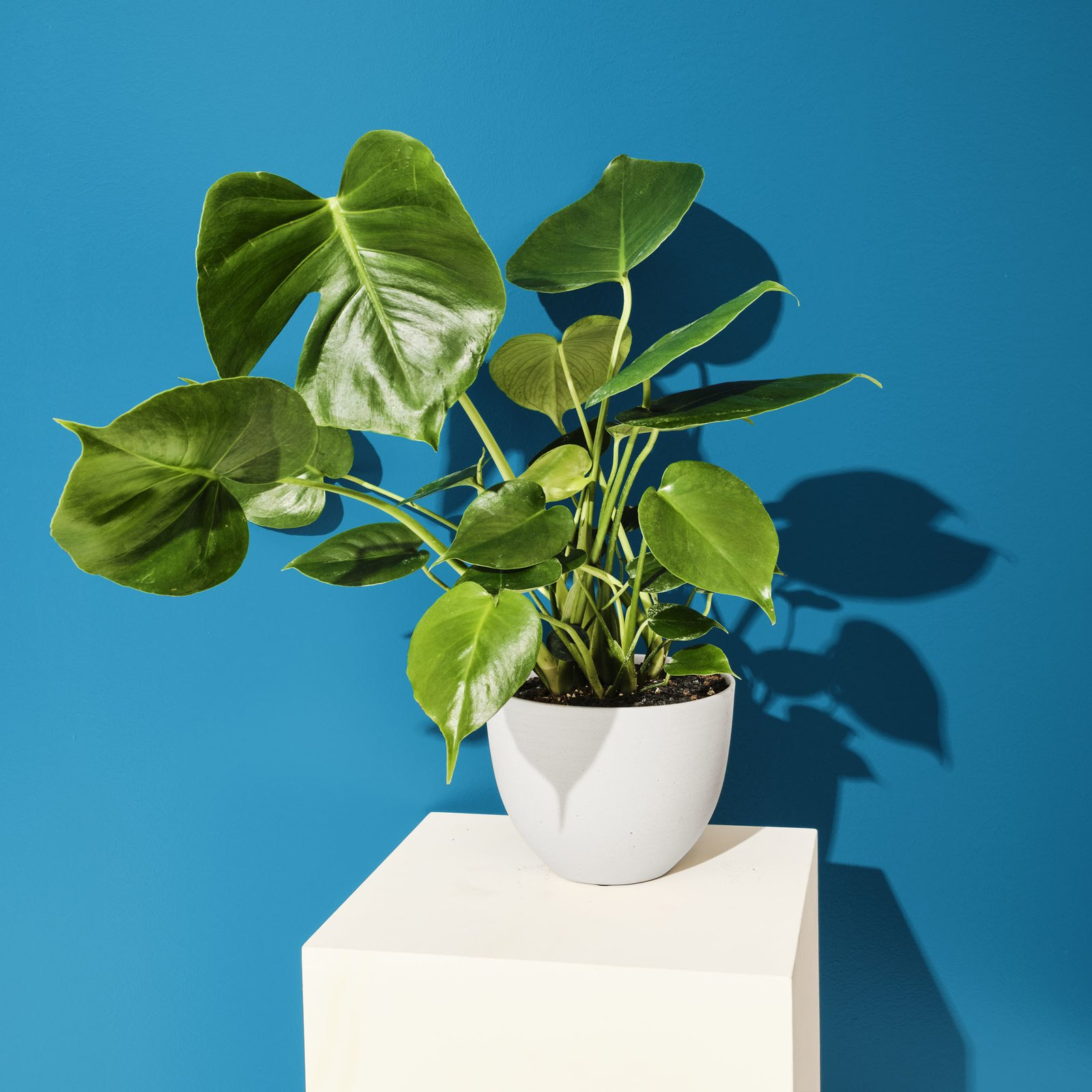 Fiberstone Pot-Sprout Home