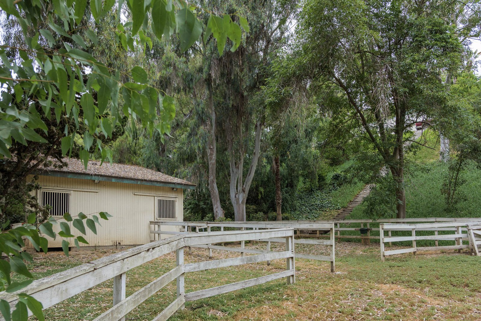 Outdoor Steps in the hillside lead down to the property's horse barn and large pasture.  Numerous eucalyptus tress dot the landscape.  Photo 16 of 16 in A One-of-a-Kind Midcentury Modern Has Resurfaced on the Market to the Tune of $3.5M