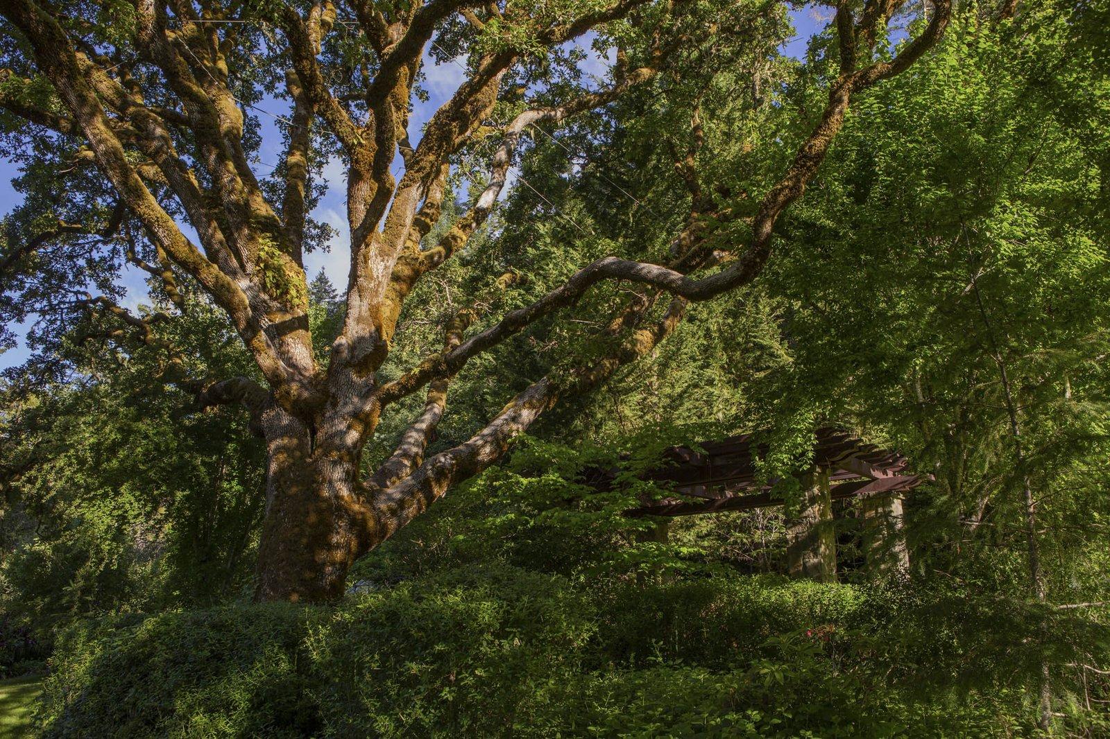 Redwood Grove Estate site
