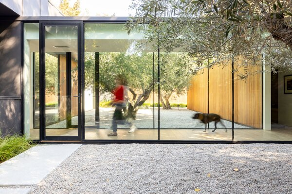 Glass walkways allow family members to feel like they're walking through a grove of olive trees while still being indoors.