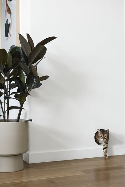 A discreet entryway to a hidden litter box perforates a white wall.