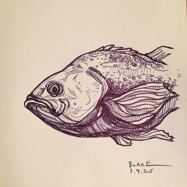 #fish #molskine  #sketch with a #bic  Sketchbook