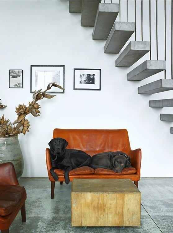 #labs #chocolatelabs #stairs #choppingblock  Inspiratie nieuw huis from Pets