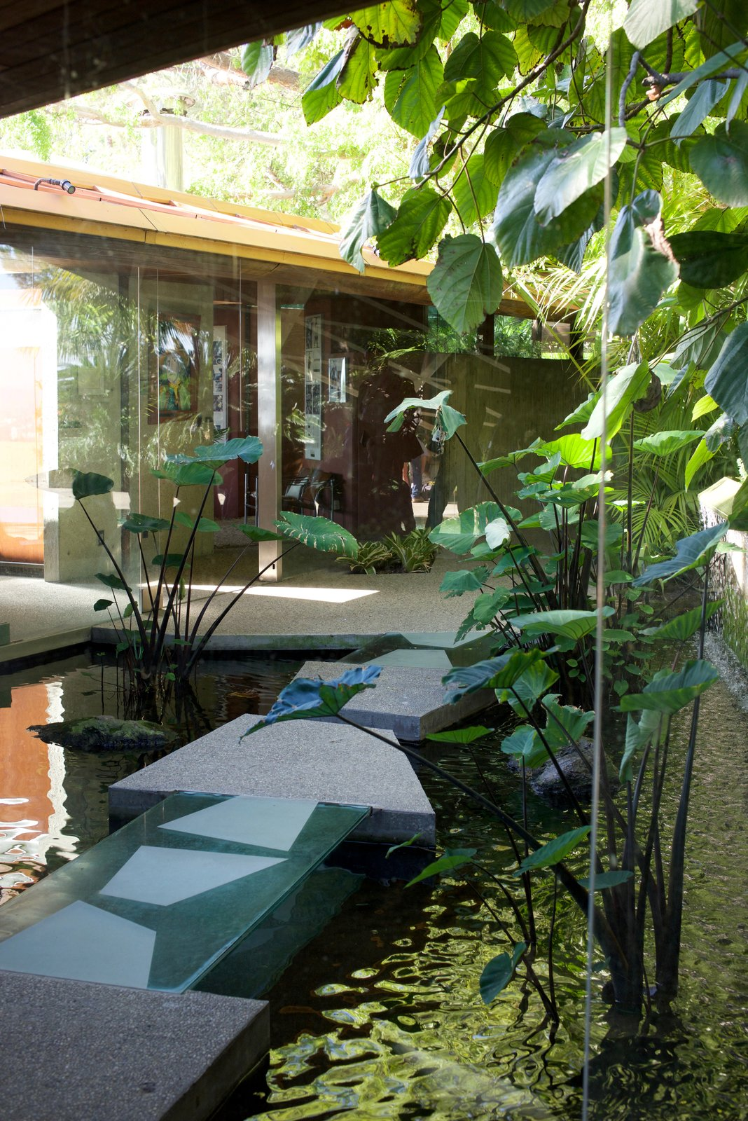 Two sections of the house are connected by a pond that holds a number of substantially sized fish.  Behind the Scenes at John Lautner's Sheats-Goldstein Residence