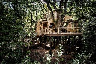 The Woodman's Tree House stands interwoven into the landscape in Dorset as part of a larger luxury camping site.