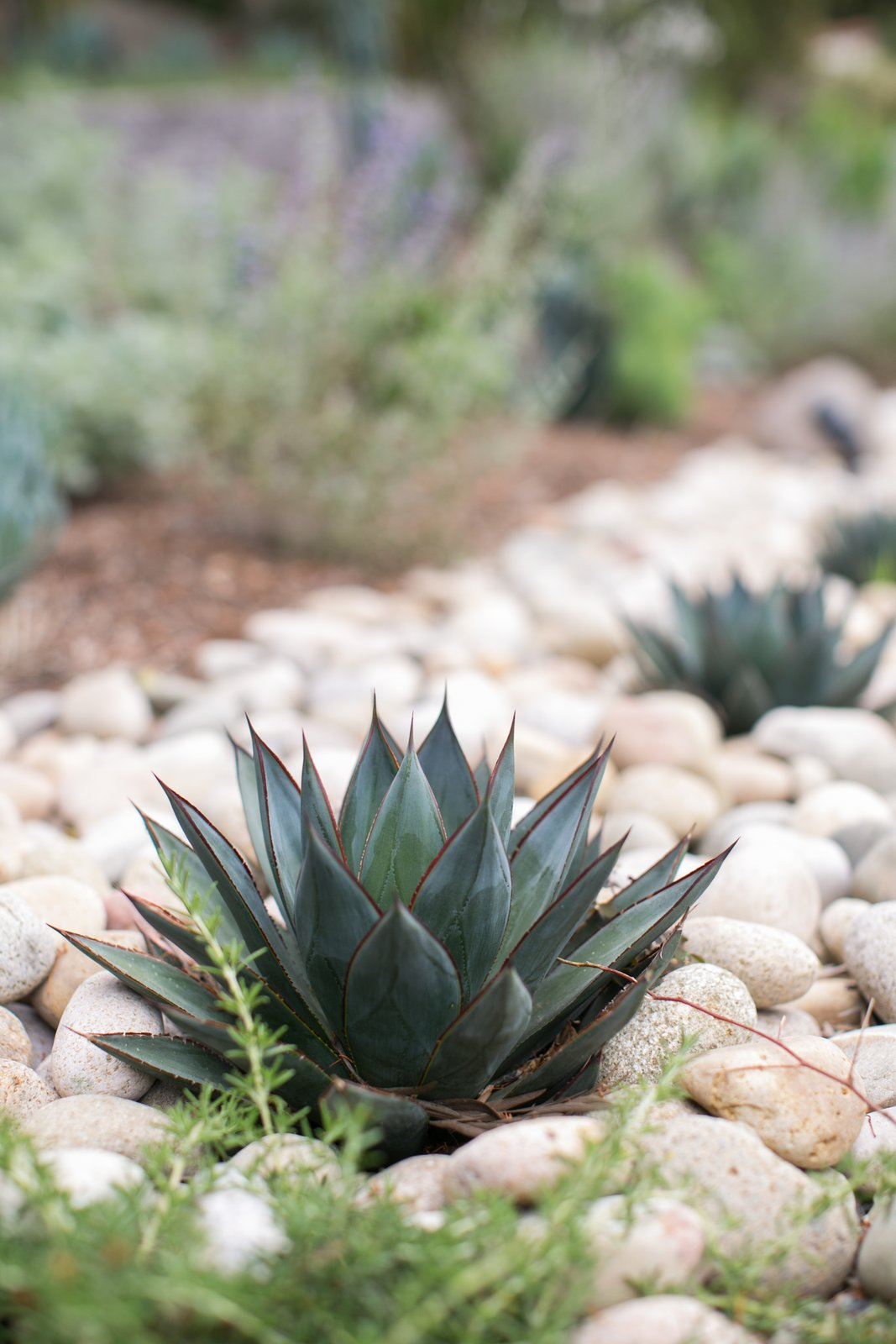 blue agave  Backyard Style from Paint It Black!