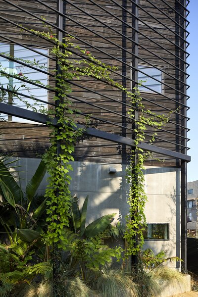 """The steel screen was """"intended to be a framework for climbing plants and, as a result, create a filtered view—both in and out—from the oversized loft window,"""" Melanie shares."""