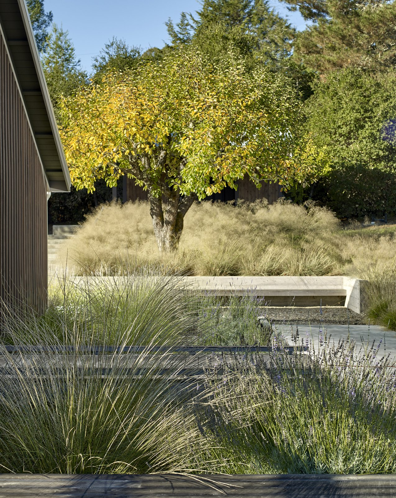 Outdoor, Shrubs, Lap Pools, Tubs, Shower, Concrete Pools, Tubs, Shower, Back Yard, Hardscapes, Side Yard, Horizontal Fences, Wall, Gardens, Decomposed Granite Patio, Porch, Deck, Flowers, Swimming Pools, Tubs, Shower, Walkways, Woodland, Garden, Large Patio, Porch, Deck, Concrete Fences, Wall, Grass, Landscape Lighting, and Concrete Patio, Porch, Deck Orchard House Landscape  Orchard House by Cary Bernstein Architect