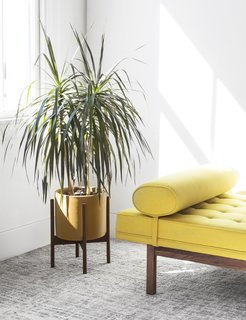 The Modernica Case Study Ceramic Cylinder is a stoneware planter that is high fired and available in four matte colors: charcoal, pebble, mustard, and white. We're particularly big fans of the mustard color paired with other bright yellows and a white coat of wall paint.