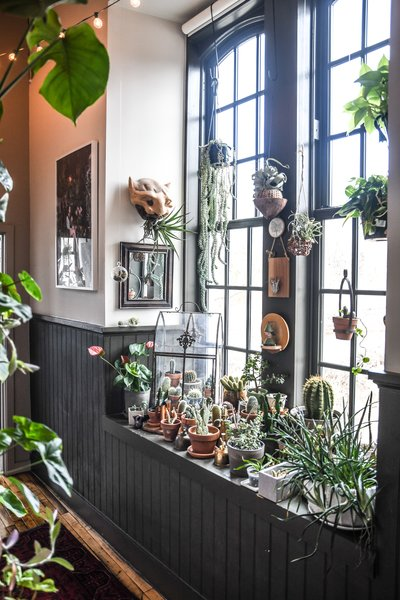 Succulents and cacti fill a sun-drenched nook in the hallway.