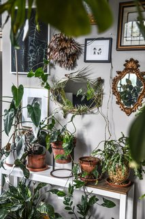 Potted and climbing plants with vintage mirrors and artworks in the bedroom.