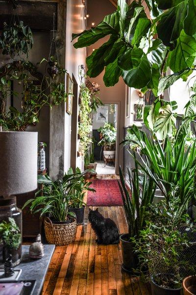The hallway displays plant variety.
