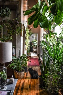 When designer Hilton Carter furnished the industrial-style Baltimore apartment and work studio he shares with his wife Fiona, their dog Charlie and two cats Zoe and Isabella, he created a wondrous indoor woodland that offers all the benefits of being outdoors without leaving home.