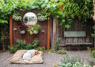 Whitney designed a living wall with a large round mirror for the side garden, where the rescue beagles nap in the sunlight.