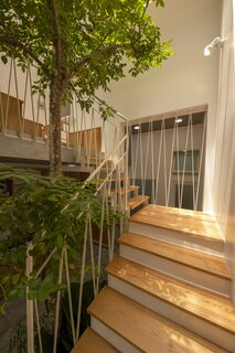 Sunlight interacts with the carambola tree, casting shadows onto the wooden stair treads.