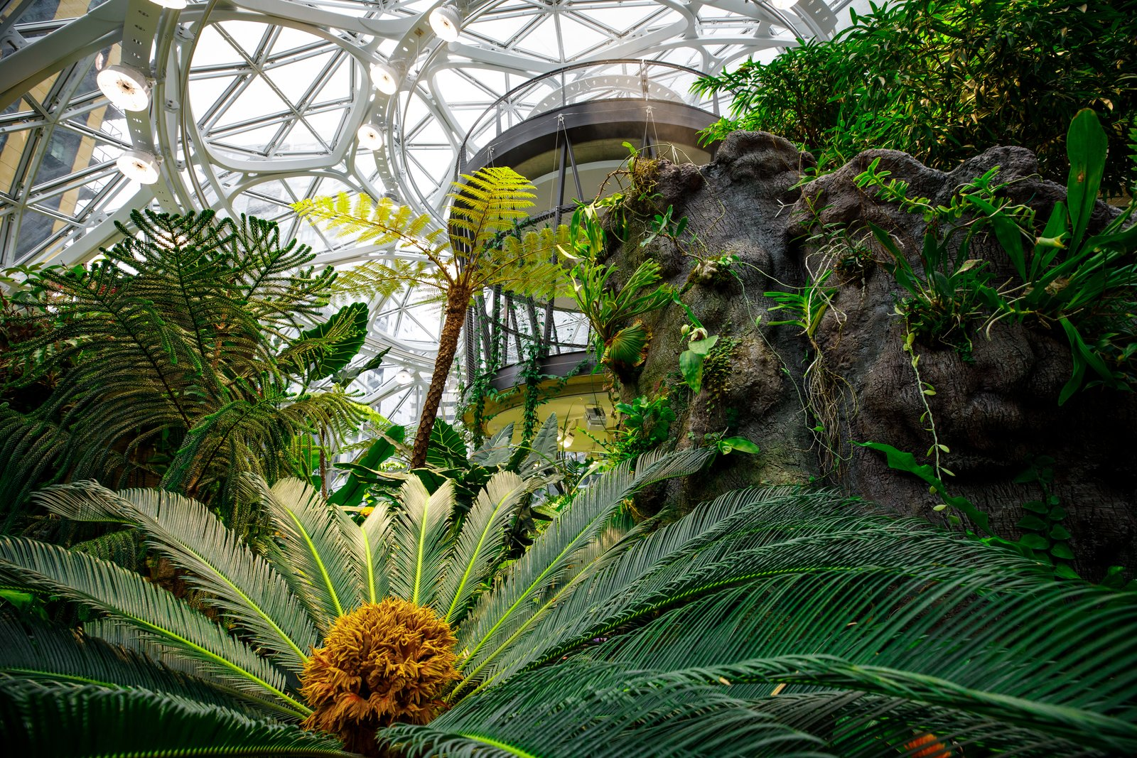 Outdoor, Gardens, and Garden Exposure to nature is proven to put people at ease and help them think more creatively, the spheres are designed to help Amazon employees feel and work their best.  Photo 8 of 9 in Meet Downtown Seattle's Newest Landmark: The Amazon Spheres