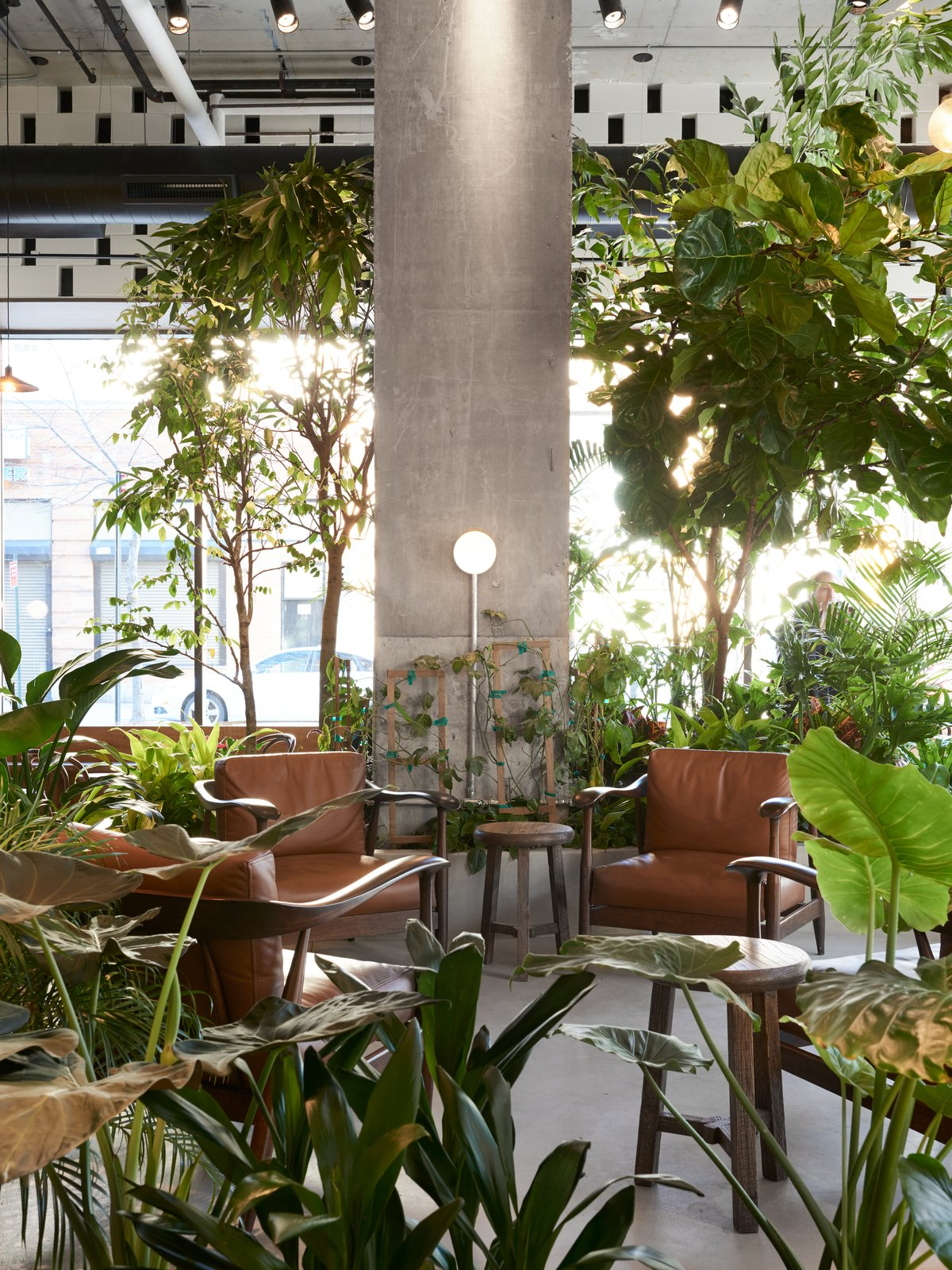 Dining Room, Wall Lighting, Concrete Floor, Chair, Track Lighting, and Stools The cafe's central lounge area houses the lush indoor garden.     Photo 4 of 10 in This New Brooklyn Cafe Is Brewing Up More Than Tasty Artisanal Coffee
