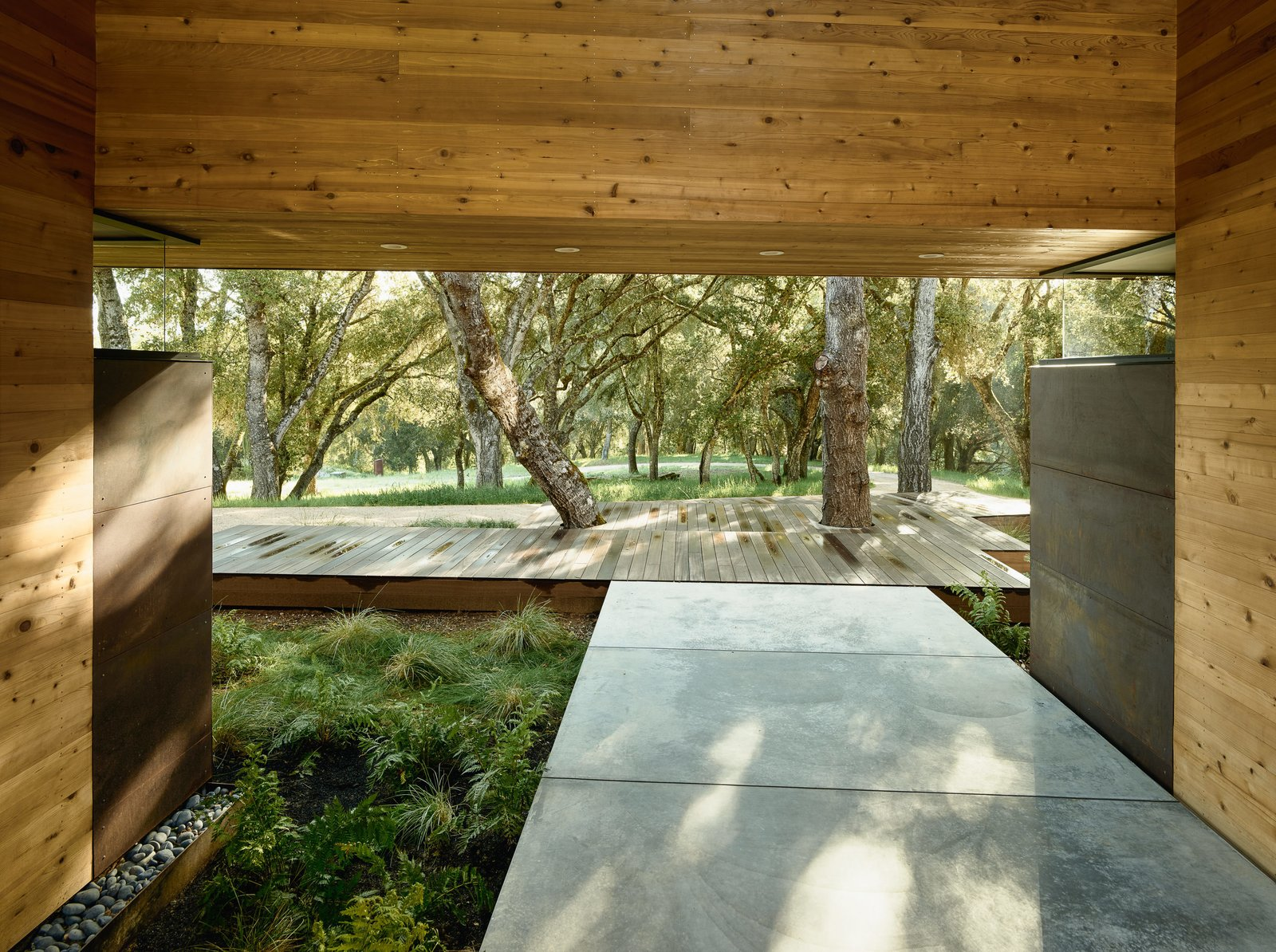Outdoor, Trees, Concrete, Grass, Side Yard, Wood, and Shrubs Framing the views required a careful negotiation of the balance between the oak cluster and clearing.   Outdoor Side Yard Concrete Wood Photos from This Stunning Home Hugs the Contours of an Oak-Covered Hill