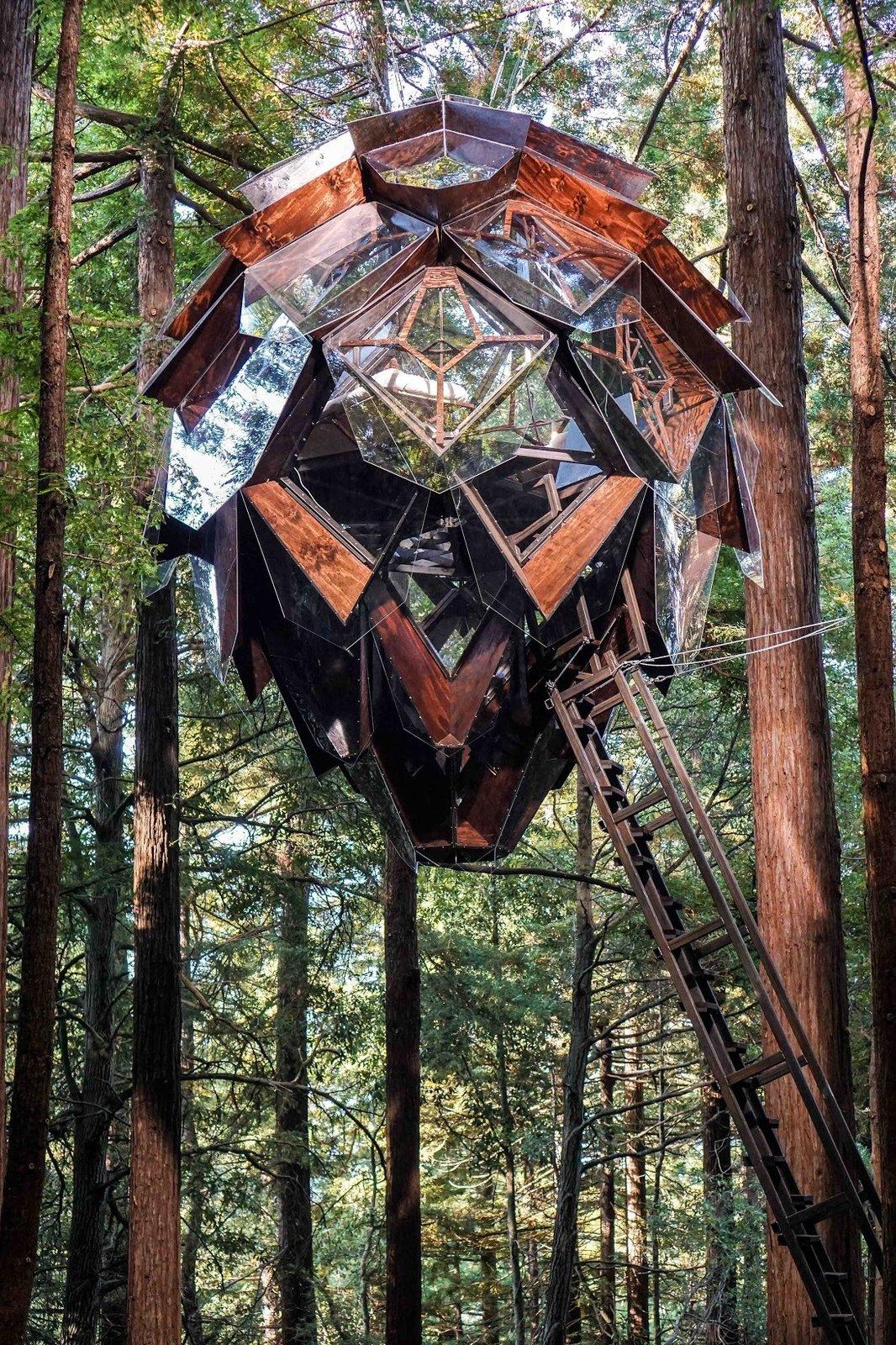 Pinecone tree house